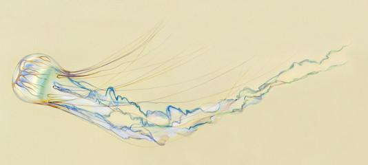 Нарисованная медуза на желтом фоне
