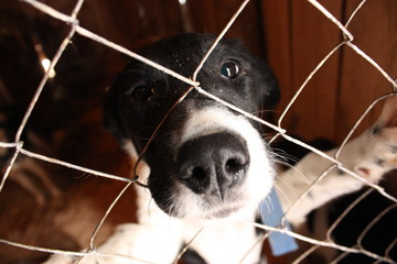a shelter for dogs, dog nose stuck through the bars