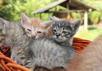 homeless cat in basket