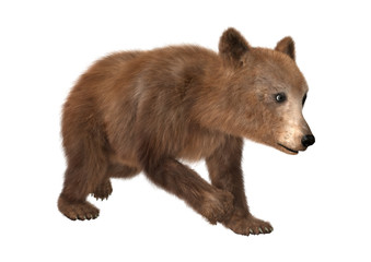 3D Rendering Brown Bear Cub on White