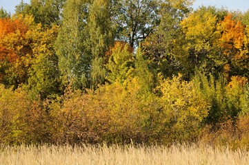 Grove of trees in autumn