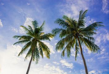 Beautiful sunset coconut tree at Bang saphan,Thailand