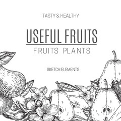 Vector design of hand drawn pear. Vintage sketch style illustration. Organic eco food. Whole , sliced pieces half,leaves and flowers leave . Fruit engraved .