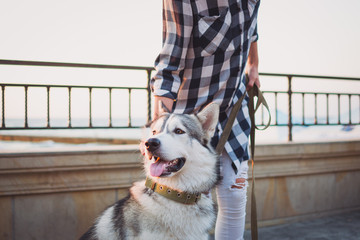 Cute siberian husky dog on sea front at sunrise or sunset