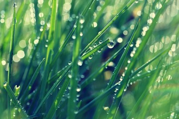 Spring. Beautiful natural background of green grass with dew and water drops. Seasonal concept -...
