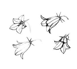 bluebells flowers hand-drawn
