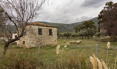 stone house and Goats and sheep