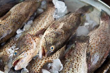 Fresh Grouper fish on ice