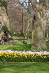 Printed kitchen splashbacks Narcissus The Keukenhof, Dutch Public Spring Flowers Garden, Lisse, Zuid H