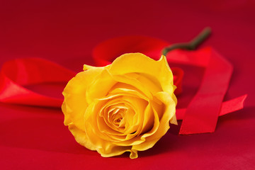 Yellow rose on the red background. Heart from ribbon