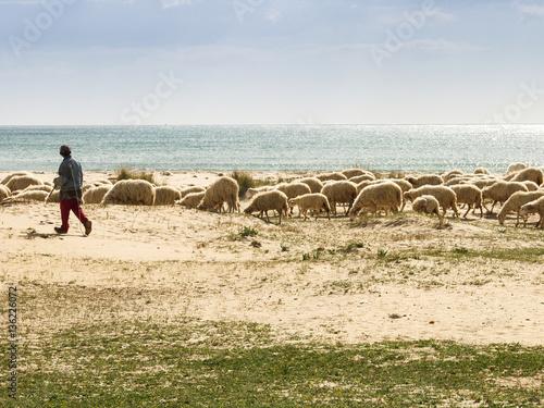 Sheep herd at Porto Palo, Sicily, Italy