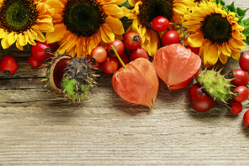 Wall Mural - Sunflowers and wild rose fruits on wooden background