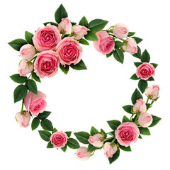 Pink rose flowers and buds circle frame