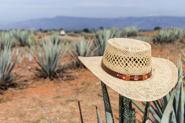 Sombrero on agave. Hat on a cactus.Mexican sombrero on agave. Hat. 9fb702514df