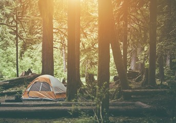 Wall Mural - Tent Camping in the Forest