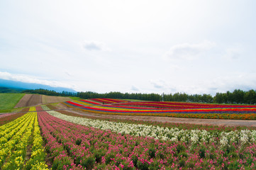 夏の北海道の美しい丘