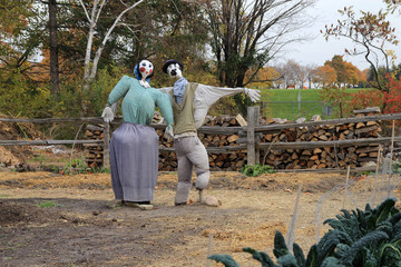 Two scarecrows in vegetable garden