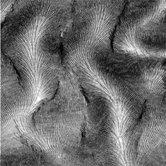 Wavy vector fur with folds