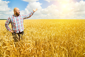 Great harvest. Happy farmer shows a ripe field of wheat with blue sky and sun.