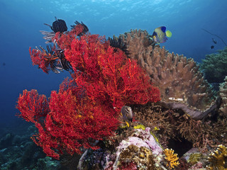 Colorful tropical reef (Sea Fan, Feather Stars and Sponge)