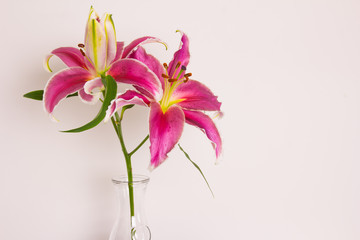 Lily flower in a vase