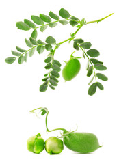 Green chickpea on a branch, and in the pod isolated on white background