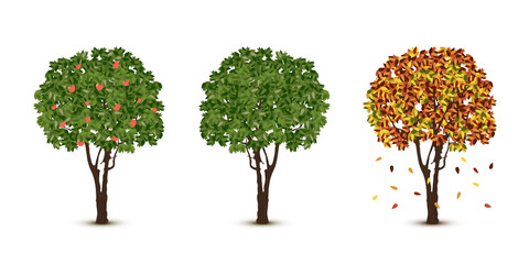 Vector trees set on white background