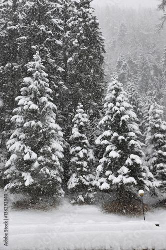 Neve Montagna Bosco Alberi Innevati Nevica Rami Neve Bianco E Nero