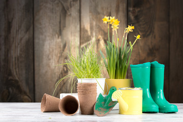 Canvas Prints Narcissus Garden tolls and spring seedling on wooden background. Rubber, narcis and tulips.