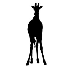 Giraffe seen from front - Silhouette - Vector Illustration