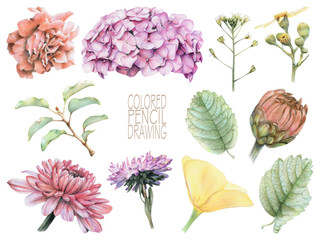 Set of different spring flowers and plants drawn by hand with colored pencils. Pencil drawing. Set of floral elements to create compositions