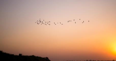 sunset and bird