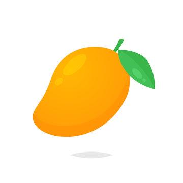 Mango fruit vector isolated