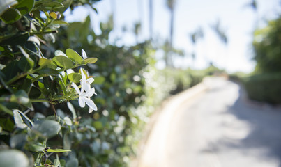 Beautiful Walkway in Mexico with Plants and Dense Vegetation. White Flower in Bloom