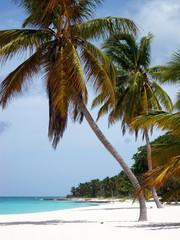 Panorama di un isola nel mar dei Caraibi con palme e spiaggia bianca