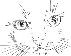 cat - drawing on tablet