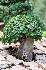 Photo unusual bright bonsai