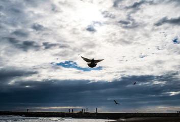 Holy spirit bird flies in blue sky, bright light shines from heaven, flying pigeon, sea on the background