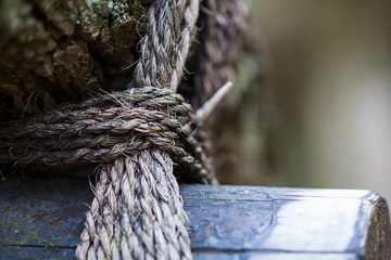 Wrapped rope on the old wood in the forest
