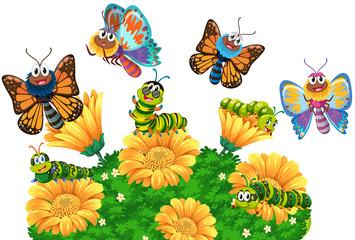 Caterpillars and butterflies in the garden