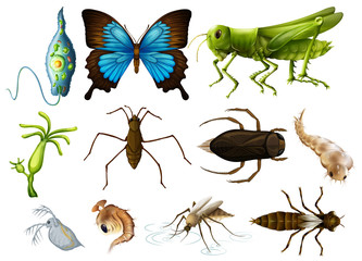 Different types of insects on white background