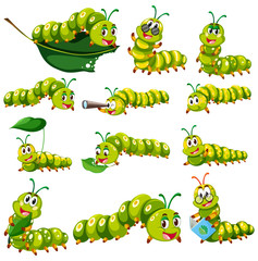 Green caterpillar character in different actions