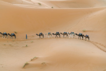 caravan in the desert.