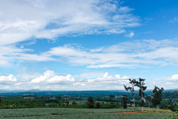 Colorful landscape of beautiful nature against blue sky and cloudy over tranquil nature. Outdoor at the daytime on summer day. Idyllic rural view of pretty surroundings.