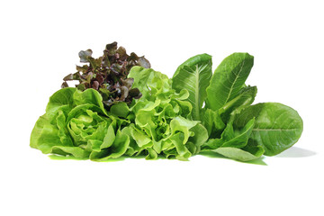 Set with lettuce salad on white background. Fresh Romaine Lettuce , Cos Lettuce, Red and Green Oakleaf lettuce Vegetable salad isolated on white background.