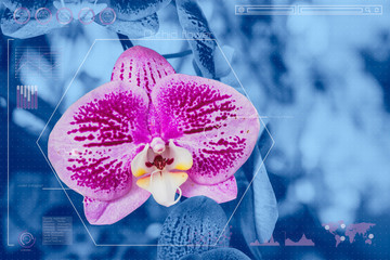 Botany information technologies or Plant Biology analysis, Orchid flower biotech.