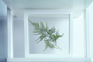 Frame with branch on stairs on white background