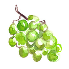 Bunch of green grapes painted in watercolor on clean white background