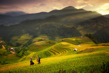 Rice fields on terraced of Mu Cang Chai