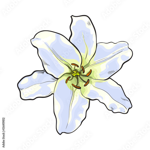 Single Hand Drawn White Lily Flower Top View Sketch Style Vector